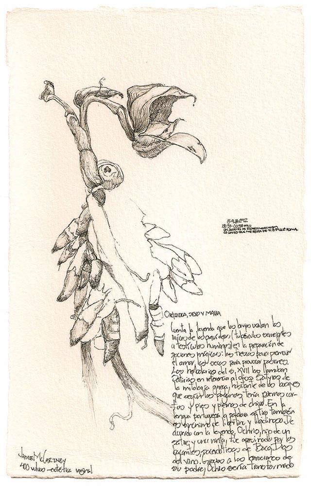 Flora de Occidente. Residuos de un viaje de exploración. Estudio de orquídea, tinta sobre papel de algodón, 21x13 cm, 8-9 de julio de 2012.