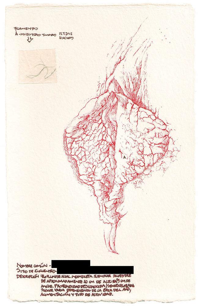 Flora de Occidente. Residuos de un viaje de exploración. Flor caníbal, tinta y vellos púbicos sobre papel de algodón, 21x13 cm, 2012