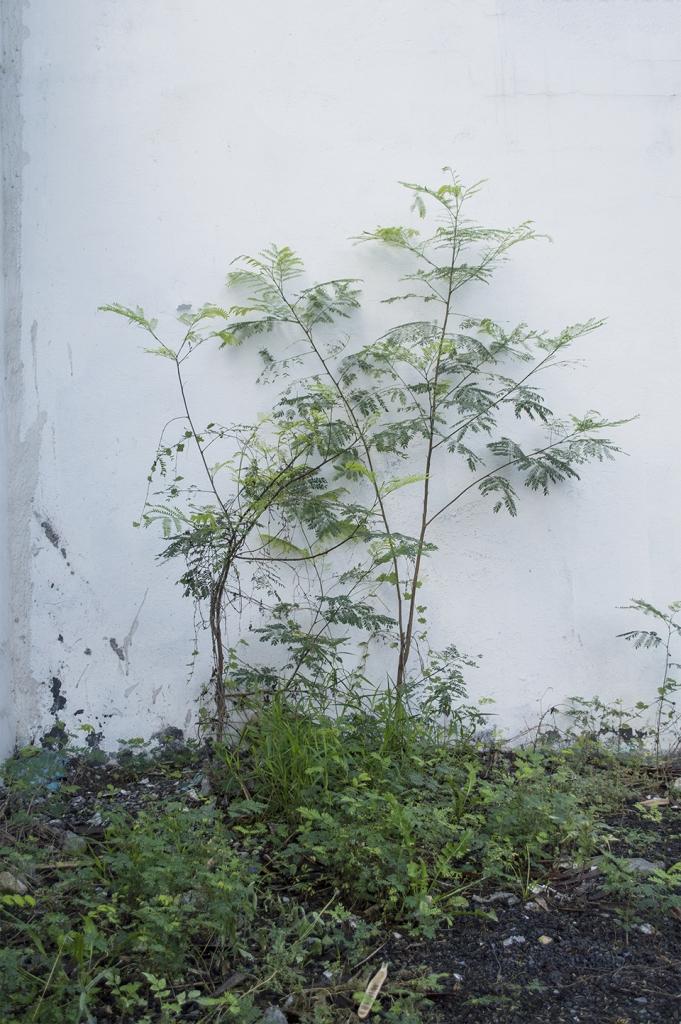 De la serie fotográfica: Tipologías de libertad. Victoria Fava.