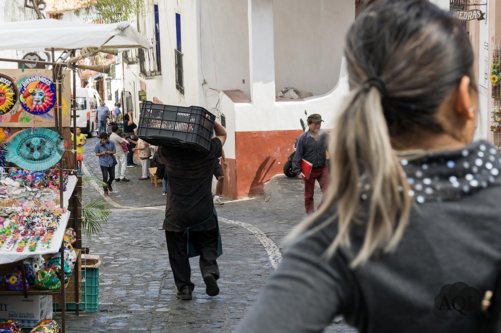 © Alejandro Quezada Figueroa.